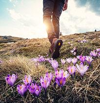 Step into Spring!