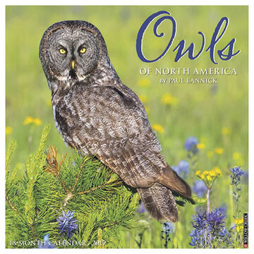 Willow Creek Press Owls 2019 Wall Calendar