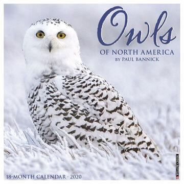Willow Creek Press Owls 2020 Wall Calendar