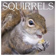Willow Creek Press Squirrels 2019 Wall Calendar