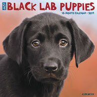 Willow Creek Press Just Black Lab Puppies 2019 Wall Calendar