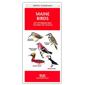 Maine Birds by James Kavanagh
