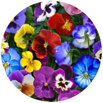Andréas Decorative Pansies Jar Opener