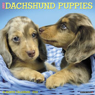 Willow Creek Press Just Dachshund Puppies 2018 Wall Calendar