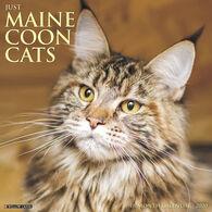 Willow Creek Press Just Maine Coon Cats 2020 Wall Calendar
