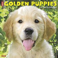 Willow Creek Press Just Golden Puppies 2020 Wall Calendar