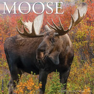 Willow Creek Press Moose 2021 Wall Calendar