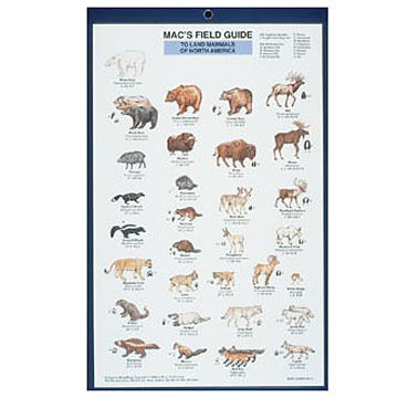 Mac's Field Guides: North American Land Mammals by Craig MacGowan