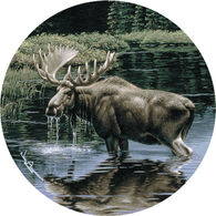 Thirstystone Moose In Stream Coaster Set, 4-Piece