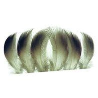 Wapsi Mallard Drake Belly Fly Tying Material