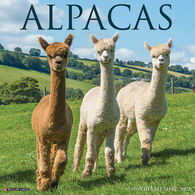 Willow Creek Press Alpacas 2021 Wall Calendar
