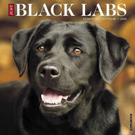Willow Creek Press Just Black Labs 2018 Wall Calendar