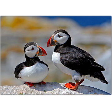 Lori A. Davis Photo Card - Atlantic Puffin