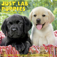Willow Creek Press Just Lab Puppies 2018 Wall Calendar