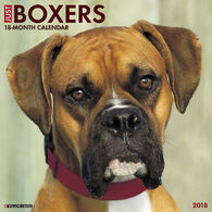 Willow Creek Press Just Boxers 2018 Wall Calendar