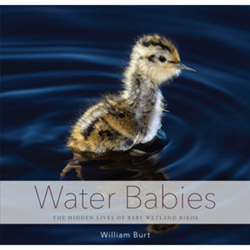 Water Babies: The Hidden Lives of Baby Wetland Birds by William Burt