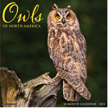 Willow Creek Press Owls 2022 Wall Calendar