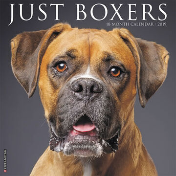 Willow Creek Press Just Boxers 2019 Wall Calendar