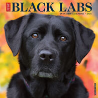 Willow Creek Press Just Black Labs 2021 Wall Calendar