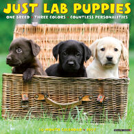 Willow Creek Press Just Lab Puppies 2021 Wall Calendar