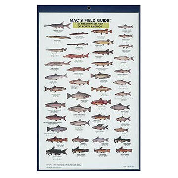 Mac's Field Guides: North American Freshwater Fish by Craig MacGowan