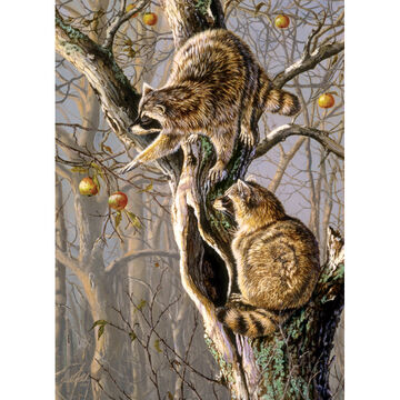 Outset Media Jigsaw Puzzle - Ringtail Raiders
