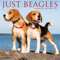 Willow Creek Press Just Beagles 2021 Wall Calendar