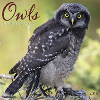 Willow Creek Press Owls 2018 Wall Calendar