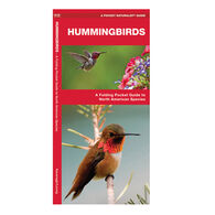 Hummingbirds: A Folding Pocket Guide to North American Species By James Kavanagh