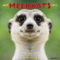 Willow Creek Press Meerkats 2018 Wall Calendar
