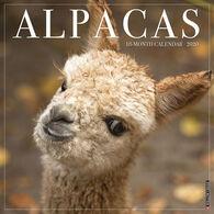 Willow Creek Press Alpacas 2020 Wall Calendar