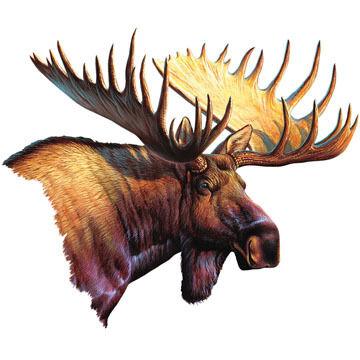 Rivers Edge Moose Car Magnet