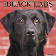 Willow Creek Press Just Black Labs 2019 Wall Calendar