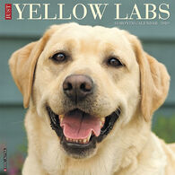 Willow Creek Press Just Yellow Labs 2019 Wall Calendar