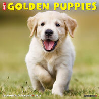 Willow Creek Press Just Golden Puppies 2021 Wall Calendar
