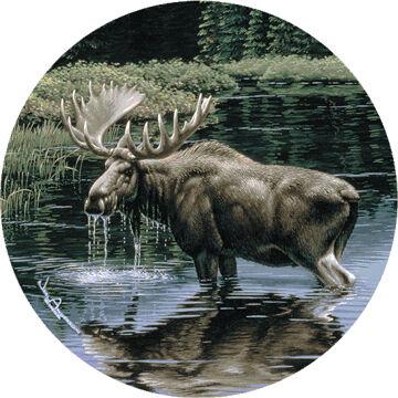 Thirstystone Moose In Stream Coaster Set, 4-Piece