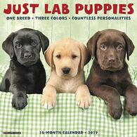 Willow Creek Press Just Lab Puppies 2019 Wall Calendar