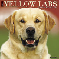 Willow Creek Press Just Yellow Labs 2018 Wall Calendar