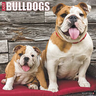 Willow Creek Press Just Bulldogs 2020 Wall Calendar