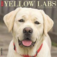 Willow Creek Press Just Yellow Labs 2020 Wall Calendar