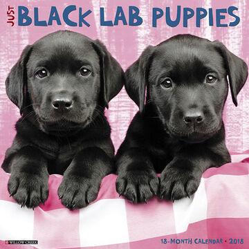 Willow Creek Press Just Black Lab Puppies 2018 Wall Calendar