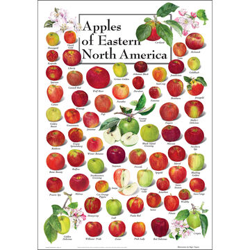 Apples of Eastern North America Poster