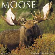 Willow Creek Press Moose 2018 Wall Calendar