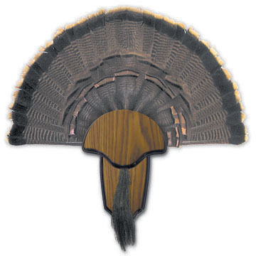 Hunters Specialties Turkey Tail & Beard Mount Kit