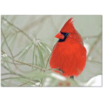 Lori A. Davis Photo Card - Male Cardinal