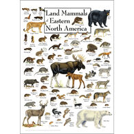 Land Mammals of Eastern North America Poster