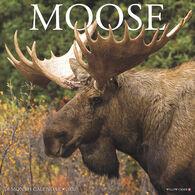 Willow Creek Press Moose 2020 Wall Calendar