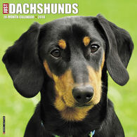 Willow Creek Press Just Dachshunds 2018 Wall Calendar