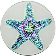 Radiant Art Green Pink Starfish Ornament