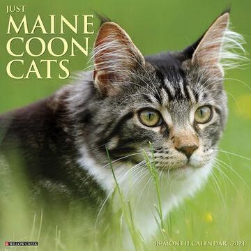 Willow Creek Press Just Maine Coon Cats 2021 Wall Calendar